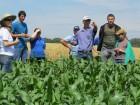 Paulo Boton mostra lavoura de milho para silagem.