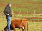 Médico veterinário Oldemar Weiller analisa o sistema de produção de leite dos Hammes.
